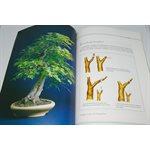 Un bonsaï réussi - Astuces et secrets