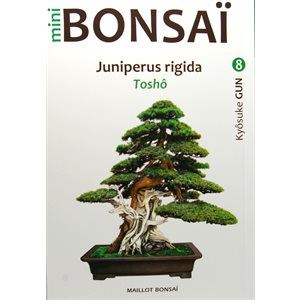 Mini-Bonsai - Zelkova - Kiosuke Gun