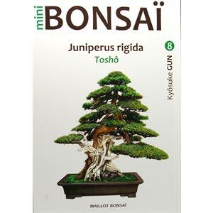 Mini-Bonsai - Génévrier Rigida - Kiosuke Gun
