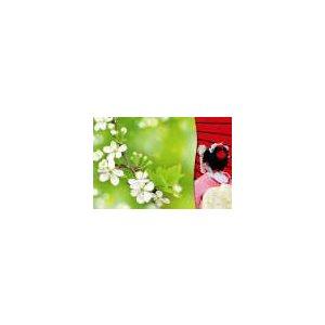 Carte - Geisha Fleurs pommetiers